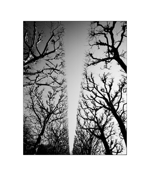 2-Paris Trees 1-1996