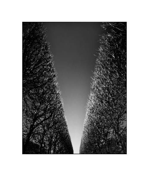 3-Paris Trees 5
